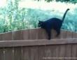 この塀、乗り越えて見せるぜ!デコボコでも前に進むことをやめない。かっこいい生き様を見せてくれた黒猫