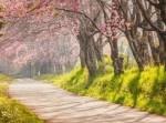 春だからこそ体験したい! ぽかぽか陽気のヒミツのお散歩デート