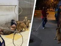 ホームレス男性を守ろうとする野良犬たちを捕獲した保健所職員らに抗議の声殺到(マレーシア)