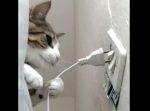 そうはさせニャイ!! 扇風機のプラグを抜いちゃう猫ちゃん。