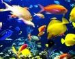 ギョッ とするほど高い!魚なのに高い!世界の高額魚トップ10