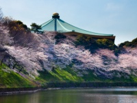 春の日本武道館(Thinstock/Photo byMichiaki Omori/amanaimagesRF)