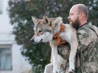 ワンルームのアパートでオオカミと一緒に暮らす父娘(ロシア)