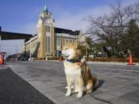 歴史に感動!柴犬まるの郡山ツーリズム第2弾(後編)