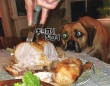 ガン見ってこういうこと。犬たちが食べ物を見つめる目つきが食いしん坊ワンザイ
