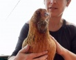わきの下を撫でると「びっくりチキン」みたいな声を出す笑い上戸の鶏