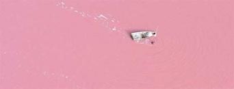 イチゴミルク色の誘惑、ピンク色に染まるレトバ湖「ラック・ローズ」