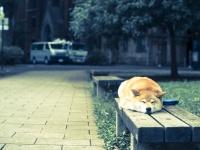 梅雨本番!柴犬まるが教える湿気トラブル対策とケア術