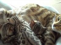 子猫と会話しながら子育てをする猫母さんの奮闘記