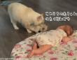 ちびっこ同士集めてみた。母猫が赤子に自分の赤ちゃんを見せに来る