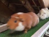 埼玉県こども動物自然公園の公式ツイッター