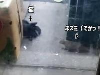 ニューヨークのネズミは猫にひるまない。なんならやってやんよ?で向かっていく