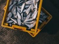 漁師の喉につまった魚、摘出後も生きていた!(エジプト)