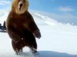 【おそロシア】クマを煽ったら襲われそうになったけどギリギリで回避した映像。