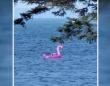 フラミンゴで漂流!?沖に流された3人と犬2匹の救助劇(アメリカ)