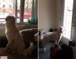 学校から帰ってくる子供たちを窓際で待ち続ける犬。そしてついに帰ってきた!