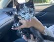 生き延びて良かった!ボロボロの状態で保護された子猫、元気になってスタバのパプチーノを大興奮で食べる(アメリカ)