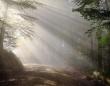 今日はどこの森へ行こう?世界各地の森の音を収録したオーディオファイルが無料公開中