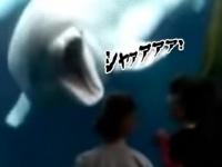 「おまえらガオォオ!」シロイルカがヒト科の子どもたちを驚かすのに興味を持った。
