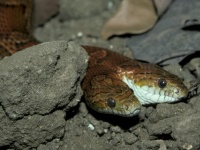 ドイツで蛇によるマッサージが人気急上昇中!?