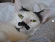猫ってそういうとこあるから。シーツを敷くお手伝いしてるつもりが完全に飼い主の作業を増やしている猫(ポルトガル)