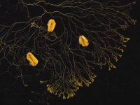 720種の性別があり、脳もないのに学習能力を持つ。自己修復可能な脅威の生命体の姿が明らかに(フランス)