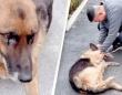 引退した警察犬がハンドラーとの再会に全身で喜びを表す。嬉し涙も?