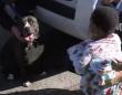 野良犬のピットブル、迷子の子供を発見し自らボディーガード役となり親と再会するまで守り抜く(アメリカ)