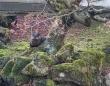 10匹のコイを殺傷したカワウソ容疑者、現在も逃走を続けており厳戒態勢がしかれている模様(カナダ)