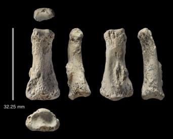 人類の移住史が書き換えられるのか?8万5000年前の人類の指の化石がサウジアラビアで発見される。