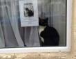 【笑!】「うちのネコ知りませんか」のポスターの横で見つかったネコ
