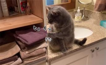 たたんであるタオルはとことん落とす猫