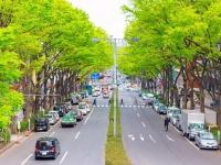 表参道のケヤキ並木(「Wikipedia」より)