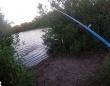 魚を狙っていた男性が、逆に絶対的悪夢に狙われていた件(フロリダ州恒例)