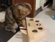 押すと出てくる...だとぅ?また猫が物理法則を学んだ模様