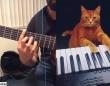 猫のピアノに合わせて飼い主のギターを演奏。いい曲できたじゃん!