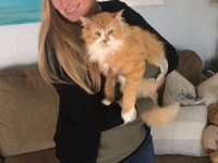 里子に出された猫、元家族をたずねて19km。折角再会できたのに、施設送りにされ安楽死寸前に(アメリカ)