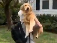36キロの愛。飼い主が帰宅すると飛び込んでくる犬の愛情表現に関する海外の反応