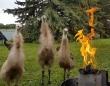 何かを召喚する気か?炎を目の前にしたエミューたちが儀式めいた動きを繰り広げていた件(オーストラリア)