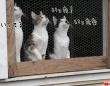 俺ならもっとうまくやれる...3匹の猫、窓越しからボール投げにエア参加中