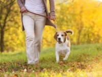 犬の散歩で健康に(shutterstock.com)