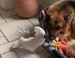 犬の鳴き声で犬を起こそうとするオウム