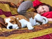 ベッドにペットは入れないで!?(shutterstock.com)