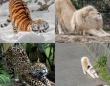 大きくても小さくても猫は猫だった。猫たちのポーズに関する海外の反応