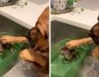「大丈夫、怖くないよ」初めてのお風呂におびえる子猫の頭を撫でてやさしく励ます犬(アメリカ)