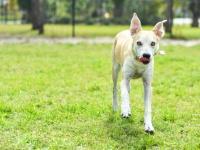 【恐怖】半数以上がトラウマに……子どものころ犬に追っかけられた経験ってある?