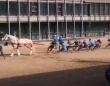 リアル馬力!馬1頭と人間10人が綱引き勝負、その結末は?