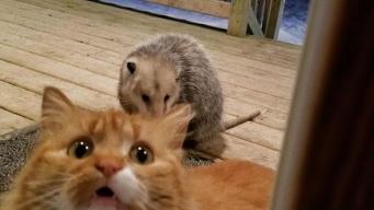 飼い主は見た。オポッサムにご飯を取られた猫の表情が雄弁だった。