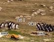 違うそっちじゃない!2つのペンギングループが集まった後に何かが起きる!