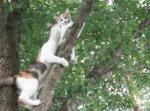 木から降りれなくなった子猫を助ける母猫! その助け方が考えさせられる方法だった